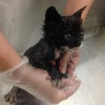 『気持ちいいね、良かったね』車の下から救われた子猫がお風呂に入って大きな声で鳴きました。