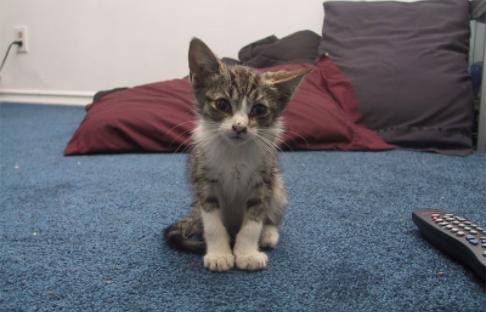 『子猫がいるよ。入れてあげるかい?』とても寒い日、ルームメイトが招いた子猫
