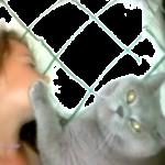 「寝ちゃダメにゃ」しつこすぎる猫www寝ている女の子の顔に手をおいて眠りを妨害www