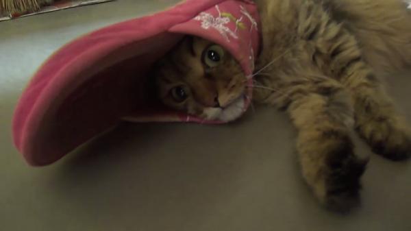 やっちまったにゃ…スリッパと遊んでいた猫ちゃんに襲い掛かる大ピンチ!!