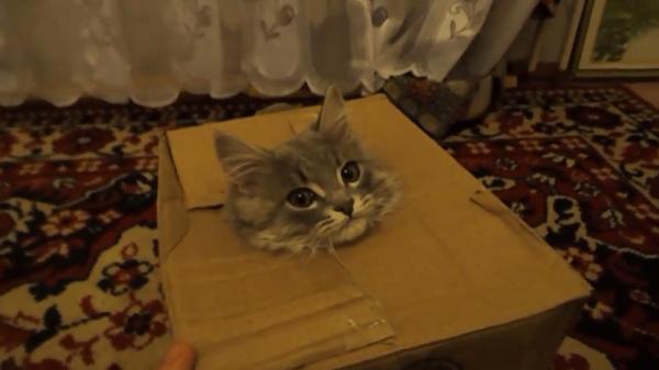 【ダンボールからこんにちは】謎のドヤ顔www出たり入ったりする猫ちゃんが可愛いw