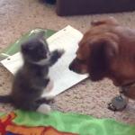 仲良くなれるかドキドキ…初対面の猫ちゃんとワンちゃん、ワンちゃんのお鼻に興味津々な猫ちゃんが可愛すぎる!!