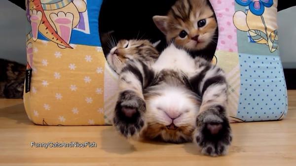 大の字で爆睡中の猫ちゃん(笑)そしてその爆睡中の猫ちゃんを踏みつけて箱の外に脱出する子猫ちゃんが可愛すぎてヤバい!