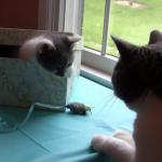 にゃんにゃんボックス登場!!箱の中から出てきた子猫ちゃんと目が合って…なんとも言えない気まずい間が愛おしい(笑)