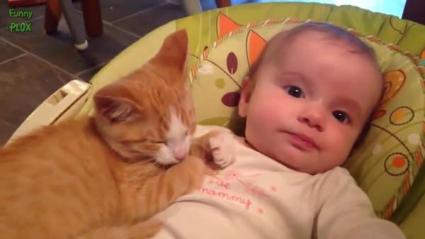 人間の赤ちゃんと子猫ちゃんの最強コンビ(笑)赤ちゃんと一緒に遊ぶ子猫ちゃんが可愛い!!