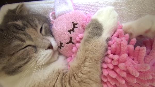 すやすやお昼寝タイム…♪ウサギのぬいぐるみをギュッと抱きしめながら眠る猫ちゃん♡