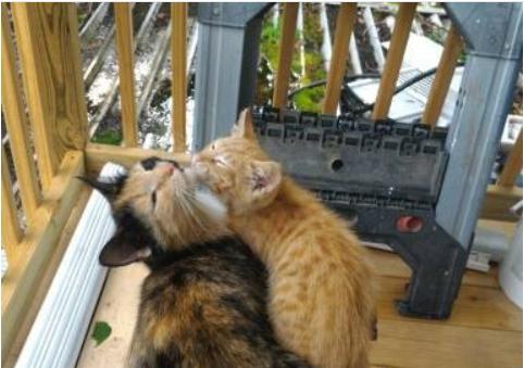 野良猫が彼女の家に子猫を連れてきた理由『あなたなら私の子猫を助けてくれるわね』