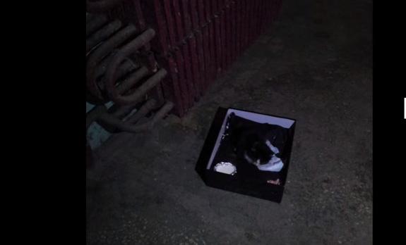 マンションの階段に置かれた箱に瀕死の子猫が入れられていた。『きみの運命を僕らが変えてみせる』
