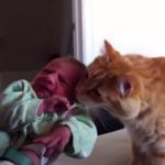 「…この生き物はなんだろ?」赤ちゃんと猫のはじめまして!