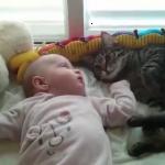 赤ちゃん眺めていたらうっかりベッドから落ちちゃった猫w「赤ちゃんかわい・・・うぉっ!?」