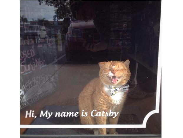 『私の本屋で暮らさない?』素敵な本屋の看板猫は彼女が迎えた孤独な老猫