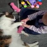 赤ちゃんが叫んでも爆睡する猫の耐久力ww