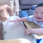 「猫ちゃん行っちゃヤダァァ!」猫ちゃんが去ろうとするとギャン泣きしてしまう赤ちゃんw