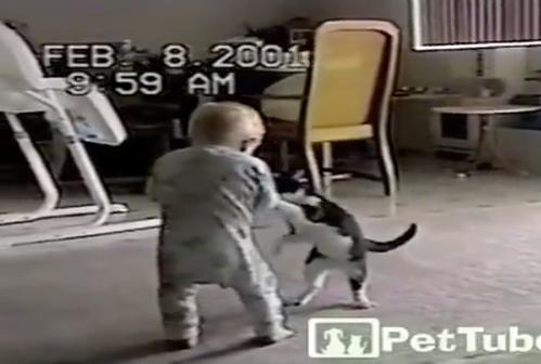 赤ちゃんと猫のプロレス!めっちゃ楽しそうでかわい過ぎ!