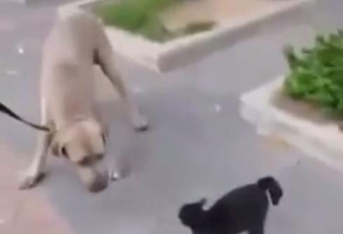 「うちの子に何すんだ!!」大型犬に立ち向かうママ猫がかっこいい!!