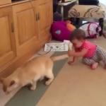 猫の尻尾を引っ張る赤ちゃん(汗)猫「耐える……!」