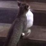 小柄なママ猫さん、長い階段もがんばって子猫を運ぶ!