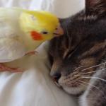 鳥「猫さん!起きて!」猫「気持ちいい~Zzz」鳥さんの努力むなしく……