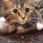 「…うちの子に何か用??」ママ猫さんは心配性!鉄壁のガードで子猫を守ります!