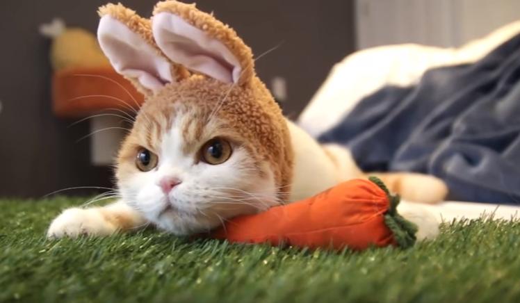 『撮影は嫌いじゃないよ。彼女が喜ぶからね。』イースターにウサギのコスプレが話題になった猫