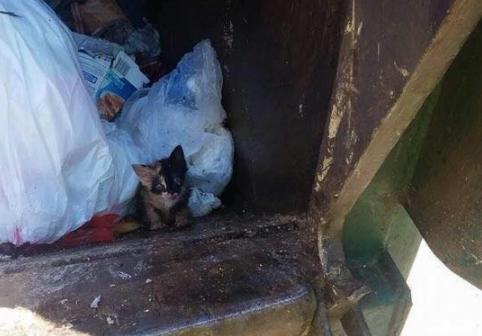 『何が入っているんだ?』清掃員が収集車の中に発見したゴミ袋に捨てられていた子猫