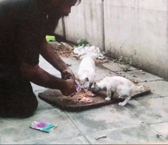 彼は路上でライムを売り続ける『私は数日食べなくても問題無いが、猫は食べる必要がある』