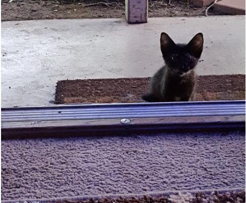 金曜日の朝、ドアを開けると子猫がじっと見つめてきました『いつから私を待っていたの?』