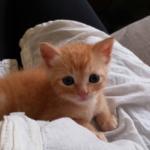 『あったか~い♡ママのお腹大好き!』妊婦の彼女か路上で見つけたよちよち歩きの子猫