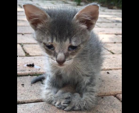 『きみはきっと走れるようになるわ。だから名前はスクーターよ!』不自由な足で懸命に近付いてきた子猫