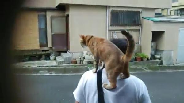お散歩は肩の上で☆飼い主さんの肩に乗って一緒にお散歩に行く猫ちゃん♪