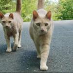 偶然訪れた動物病院で3年ぶりの再会『その猫は行方不明になったうちの猫にそっくりだ!』