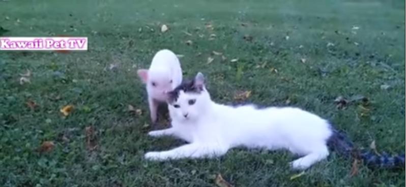 初めて他の子動物に会った時のおもしろ可愛い猫の反応