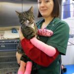 『ドアマンはボクにまかせて』施設の看板猫はかつて交通事故で大怪我をして救助された猫