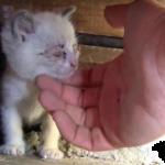 心配そうな母猫『床下で野良猫が子猫を育てているんです。私たちには手が届かないの。』