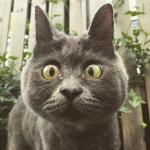 『聞こえなくても見えなくてもそれでもボクはとっても幸せ!』余命半年と言われた子猫の奇跡