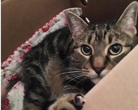 殺処分予定は明日の正午『あなたの目は何かを言いたそうね?』彼女が選んだリスキーな猫
