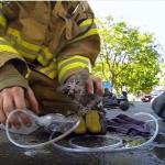 火災現場で意識を失った子猫を発見!消防士のGOProが子猫の命を救った一部始終を捉えていた