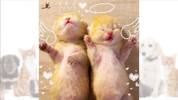 天使すぎる双子の子猫!!!かわいすぎて癒されすぎちゃいます♪