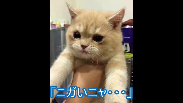 「苦いにゃ〜…」病気治療の為に飲ませているお薬が苦すぎた!!!苦さのあまり大粒の涙を流す猫ちゃん