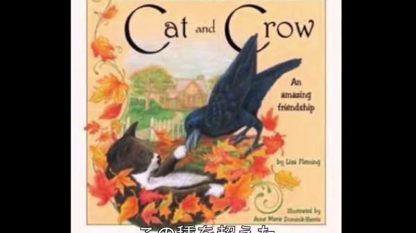 児童書にもなった種族を越えた友情実話!!子猫の世話をし続けたカラスとは