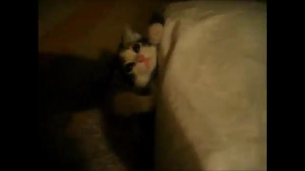 飼い主さんと遊んでいた子猫が急にアクロバティック寝を披露ww