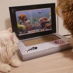 これは試したい!!インテリアとしても最適☆猫ちゃん専用の猫用パソコンがあった!これは欲しいww