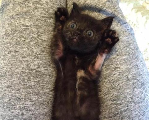 『いい?いくわよぉ』『わーい!あそぼ―!』2度の命の危機を乗り越えた小さな子猫
