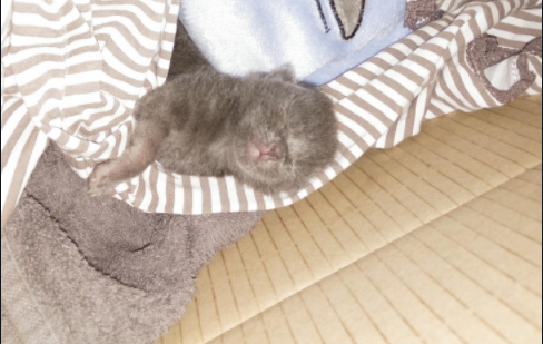 命を繋いだミルクのしずく・・・真夏の通りのゴミ箱に捨てられていた子猫を救ったカップル
