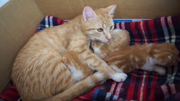 お母さん猫と子猫ちゃんたちのこそこそ話♪のんびりくつろぐ猫の親子が可愛い♡