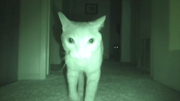 飼い猫たちが夜中何をしているか気になる!ということで撮影した結果…大運動会が繰り広げられていた…(笑)