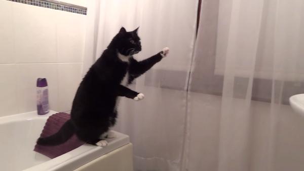 猫ちゃんvs鏡!!鏡の前の不思議そうな顔でポーズを繰り広げる猫ちゃん(笑)