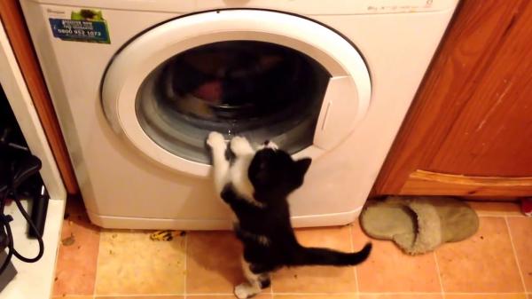 中の洗濯物がきになりすぎる!!猫ちゃんVSドラム式洗濯機(笑)