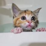 子猫の初お風呂!「あの、出てもいい?」嫌なんだけど控えめな主張がカワイイ…!