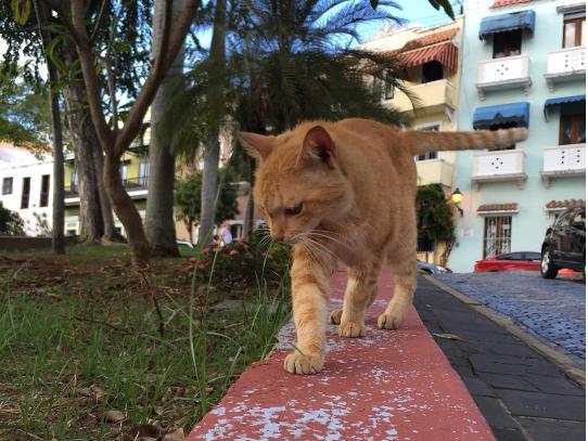 殺処分が明日に迫った日『間に合ってよかった!』NYの公園で保護されたやせっぽちの猫